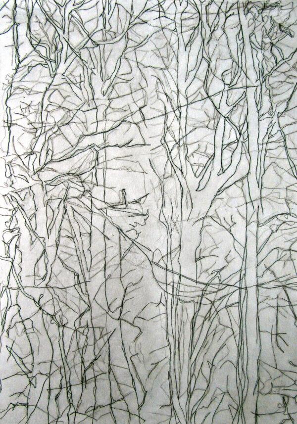 Winter Trees Image